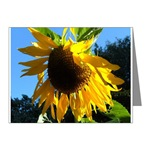 note card 20 pack